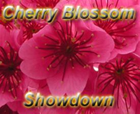 Cherry Blossom Showdown
